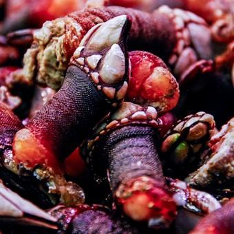 1-fornecedor-mariscos-percebas-percebes