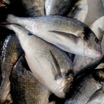 fornecedor-peixes-dourada