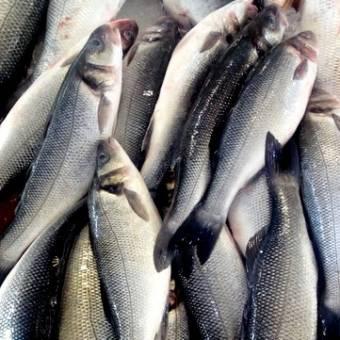 fornecedor-peixes-robalo