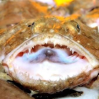 fornecedor-peixes-tamboril